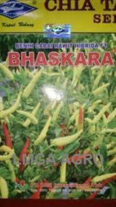 CABAI BHASKARA