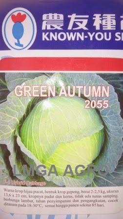 Kubis Green Autumn, Benih Kubis Green Autumn, Kol Green Autumn, Jual Kol Green Autumn, Known You Seed, Harga Murah, Terbaru, Benih Kubis, Lmga Agro
