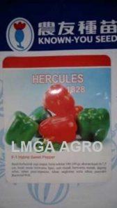 Paprika Hercules, Beli Benih Paprika Hercules Murah, Jual Paprika Hercules, Paprika Hercules F1 Murah, Harga Murah, Terbaru, Lmga Agro