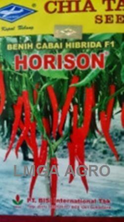 CABAI HORISON, BENIH CABAI BESAR HORISON, BENIH CABAI BESAR, HARGA MURAH, BISI, LMGA AGRO