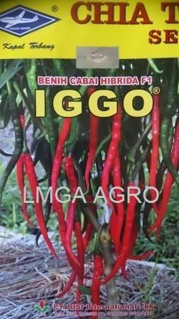 CABAI IGGO, BENIH CABAI KERITING IGGO, IGGO F1, HARGA MURAH, LMGA AGRO