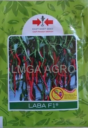 CABAI LABA, CABAI KERITING LABA, LABA F1, HARGA MURAH, LMGA AGRO