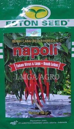Cabai Napoli, Benih Cabai Besar Napoli, Cabai Anti Virus Napoli, LMGA AGRO