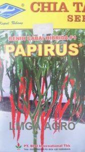 CABAI PAPIRUS