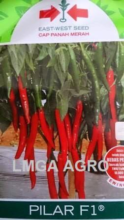 Cabai Pilar, Cabe Pilar, Jual Cabe Pilar Murah, East West Seed, Panah Merah, Lmga Agro