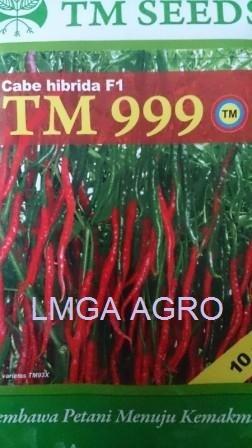 CABAI TM 999, BENIH CABAI KERITING TM 999, HARGA MURAH, LMGA AGRO