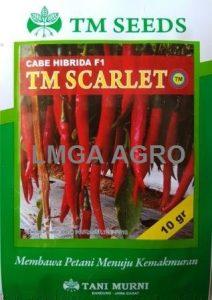CABAI TM SCARLET, cara menanam cabe merah, cabe merah
