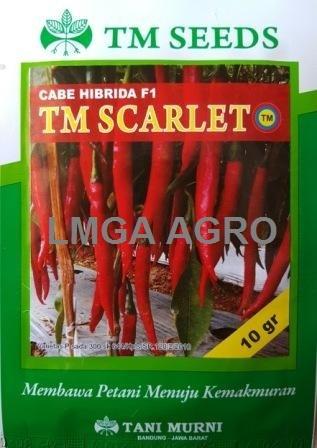 CABAI TM SCARLET, BENIH CABAI BESAR TM SCARLET, TM SCARLET HARGA MURAH,KMGA AGRO