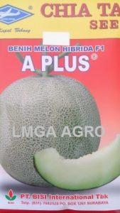 benih melon hibrida, MELON A PLUS