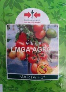 tomat marta f1, harga murah, panah merah, east west, lmga agro