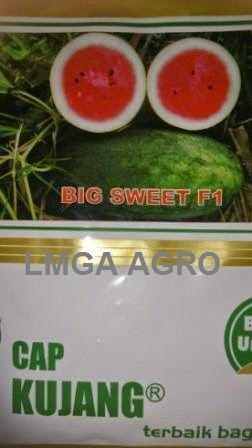 Benih Semangka Inul, Big Sweet F1, Semangka Big Sweet, Diamond Seed, Cap Kujang, Terbaru, Jual, Harga Murah, LMGA AGRO