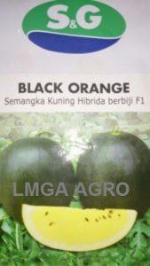 Benih Semangka Berbiji, Black Orange, SG Seed, Jual, Harga Murah, Terbaru, LMGA AGRO