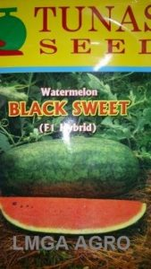 SEMANGKA BLACK SWEET