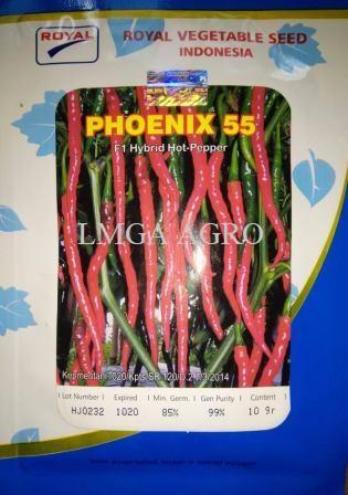 cabe merah keriting, benih cabe phoenix 55 F1, jual benih murah, lmga agro