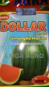 SEMANGKA DOLLAR