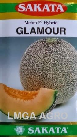 MELON GLAMOUR