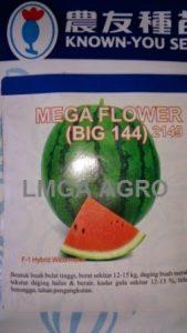 Benih Semangka Berbiji, Mega Flower,Known You Seed, Jual, Harga Murah, Terbaru,LMGA AGO