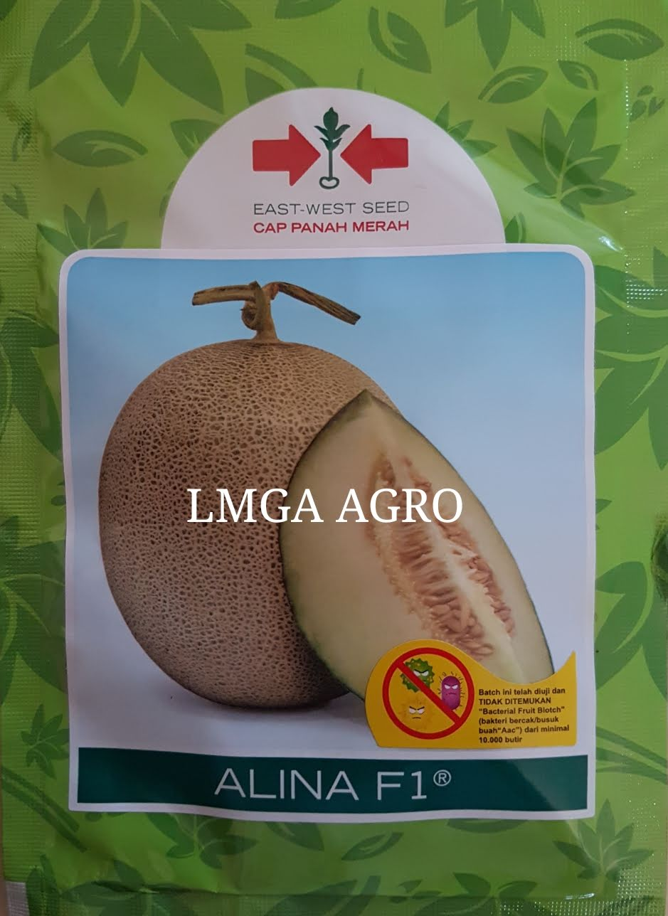 BENIH MELON ALINA F1,LMGA AGRO, budidaya melon, toko online