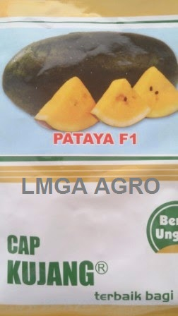 Benih Semangka Inul, Pataya F1, Semangka Pataya, Cap Kujang, Diamond Seed, Semangka Kuning, Terbaru, Jual, Harga Murah, LMGA AGRO