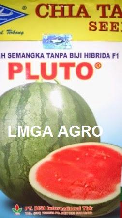 Benih Semangka Non Biji Pluto, Benih Semangka Non Biji, Semangka Pluto, Jual Semangka Pluto, Semangka Pluto Murah, Semangka Pluto Terbaik, Bisi, Bisi International, Lmga Agro
