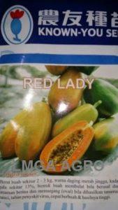 Benih Pepaya, Red Lady, F1, Harga murah, Terbaru, LMGA AGRO, KnownYou Seed