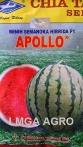Benih Semangka Berbiji, Apollo, Chia Tai Seed, Bisi, Jual, Harga Murah, Terbaru, LMGA AGRO