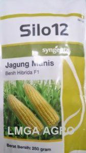 JAGUNG MANIS SILO 12