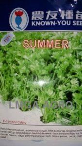 SELEDRI SUMMER
