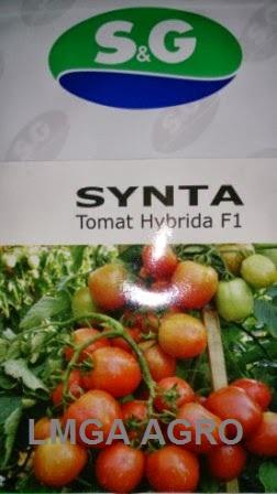 TOMAT SYNTA