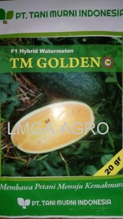 Benih Semangka Inul, TM Golden F1, Semangka TM Golden, Tani Murni, Semangka Kuning, Terbaru, Jual, Harga Murah, LMGA AGRO