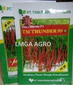 BENIH CABAI KERITING TM THUNDER 99, HARGA MURAH, LMGA AGRO
