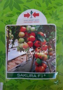 benih tomat f1 sakura