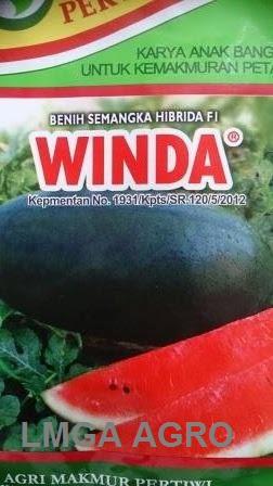 Benih Semangka Inul, Winda F1, Semangka Winda, Pertwi, Agri Makmur Pertiwi, Terbaru, Jual, Harga Murah, LMGA AGRO