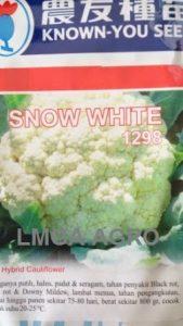 BUNGA KOL SNOW WHITE