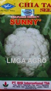 BUNGA KOL SUNNY