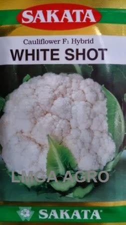 Bunga Kol White Shot, Kembang Kol White Shote, Cauliflower White Shot, Jual Kembang Kol White Shot, Sakata Seed, Harga Murah, Terbaru, Benih Brokoli Dan Bunga Kol, Lmga Agro