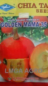BENIH WALUH GOLDEN MAMA 35