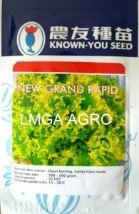 Selada New Grand Rapid, Sawi New Grand Rapid, Selada Brintik New Grand Rapid, Known You Seed, Harga Murah, Lmga Agro, Benih sawi dan Selada