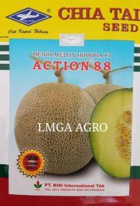 BUDIDAYA MELON ACTION 88, BENIH MELON ACTION 88, ACTION 88 CAPA KAPAL TERBANG, BISI INTERNATIONAL, CAP KAPAL TERBANG