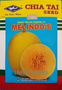 Jual Bibit Melon Melindo 6 F1-Chia Tai Seed-Cap Kapal Terbang