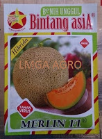 Jual Bibit Melon Merlin F1-Bintang Asia