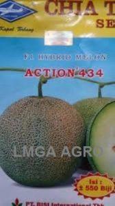 Jual Bibit Melon Action 434 F1-Chia Tai Seed-Cap Kapal Terbang