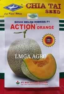 Jual Bibit Melon Action Orange F1-Chia Tai Seed-Cap Kapal Terbang