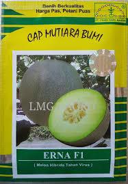 Jual Bibit Melon Erna F1-Cap Mutiara Bumi