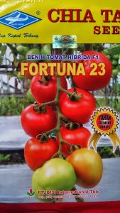 jual benih sayuran tomat fortuna f1
