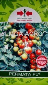 jual benih sayuran tomat permata f1