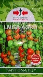 jual benih sayuran tomat tantyna f1