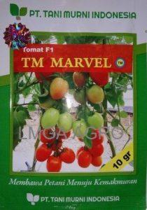 jual benih sayuran tomat tm marvel f1