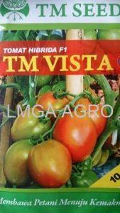 jual benih sayuran tomat tm vista f1