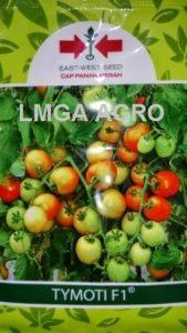 jual benih sayuran tomat tymoti f1